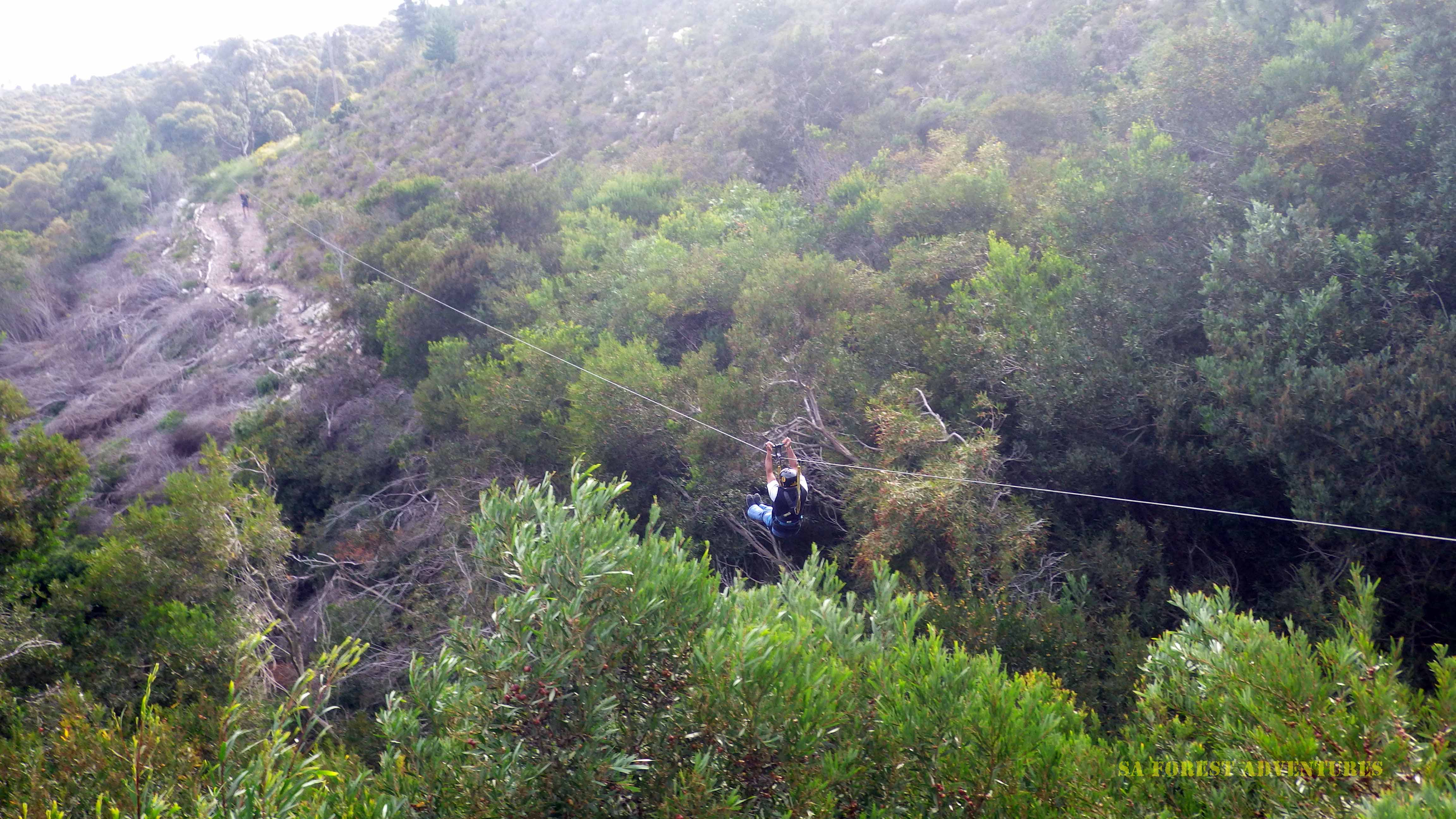 Tree Tp Zipline Tour in Hermanus