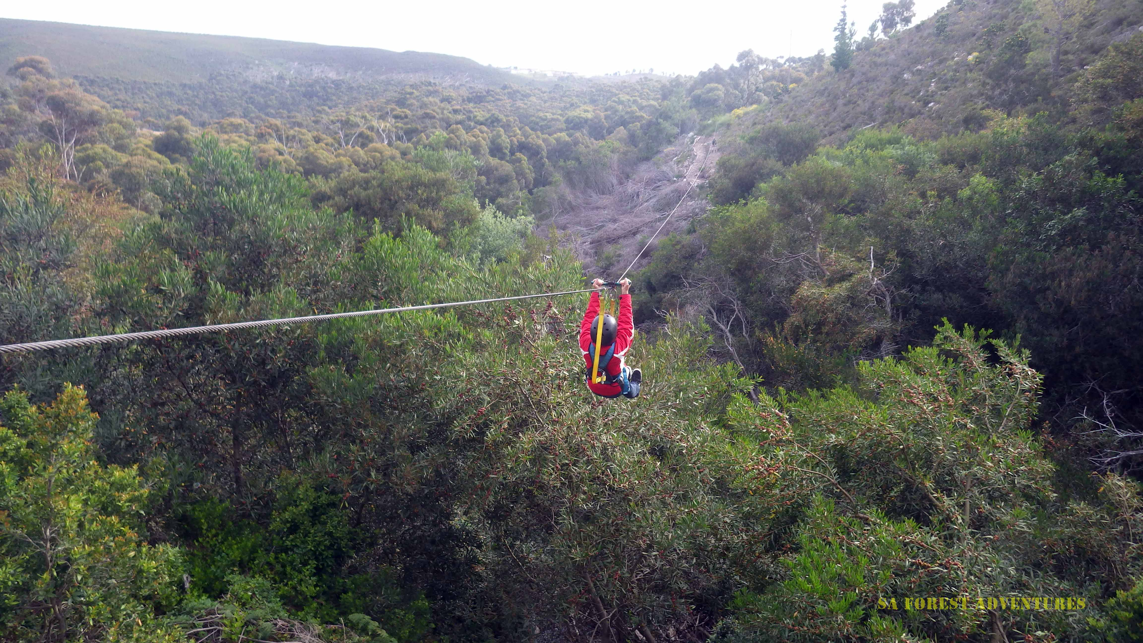 Tree Top Zipline Tour